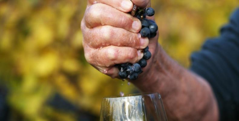 Wina naturalne w Klubie Wino