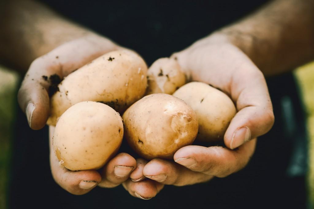 Zdjęcie przedstawia dwie męskie dłonie trzymające kilka ziemniaków.